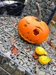 Halloweenské dýně ve stacionáři